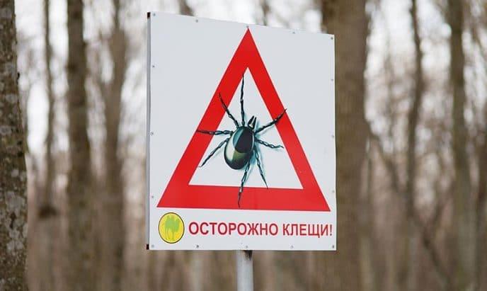 Откуда появились энцефалитные клещи в России?